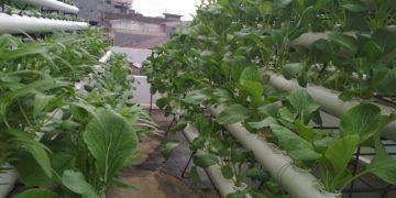 "Atap Masjid Baitussalam ""disulap"" jadi lahan tanaman hidroponik"