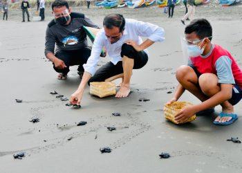 Cegah Kepunahan, Jokowi Lepas 1.500 Tukik di Cilacap