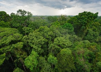 Curbing Amazon Land Listings on Marketplace - About Facebook