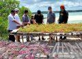 """Malra beri kemudahan investasi dukung program """"Seaweed Estate"""" KKP"""