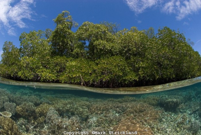 over-under-coral-reef